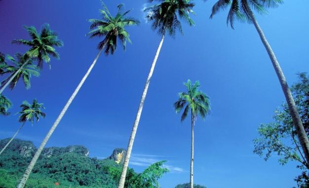 Siam Legal – Phuket Branch